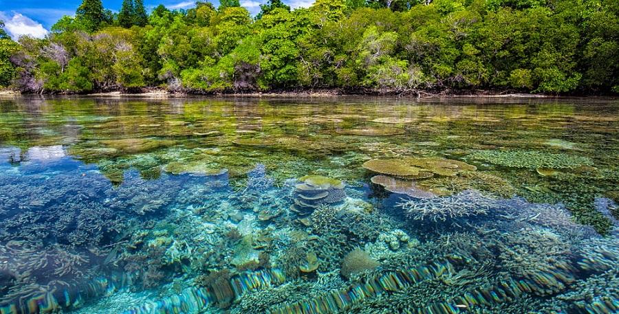 Pemandangan bawah laut Indonesia