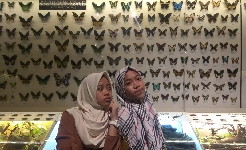 Kupu-kupu di Museum Satwa Jatim Park 2 Batu Malang