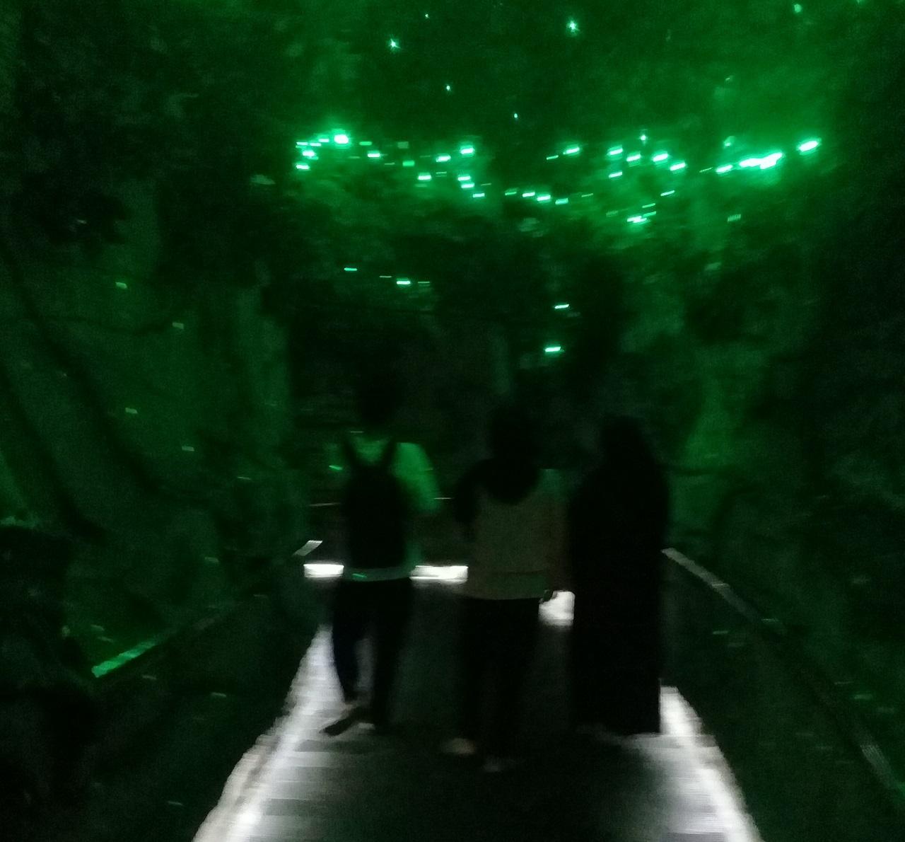 Jalan Jalan Ke Jatim Park 2 Museum Zoo Di Batu Malang Just Muha